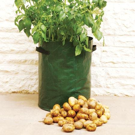 how to grow potatoes in a bag k k club 2017