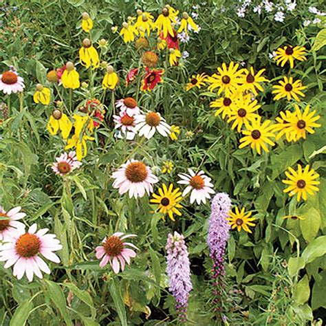 Perennial Wildflower Seed Mats by Perennial Wildflower Seed Mix Ne Seed