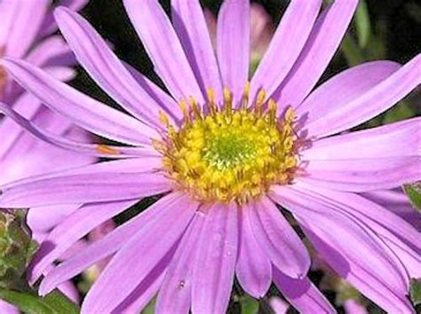 fall blooming plants zone 5 a guide to northeastern gardening late summer and fall