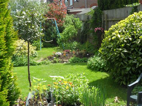 pictures of a garden my back garden and my allotment too not just greenfingers