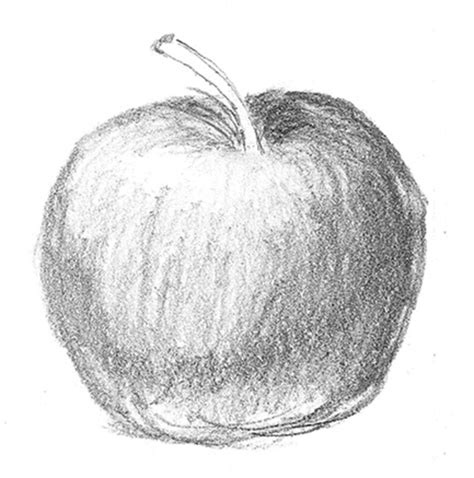 sketch by mac 17 best images about apples on contour