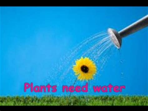 plants that don t need water plants what plants need clip 2 01 min plants what plants need air water sunlight