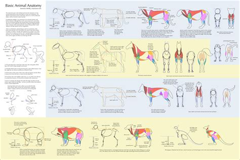 basic animal anatomy by majnouna on