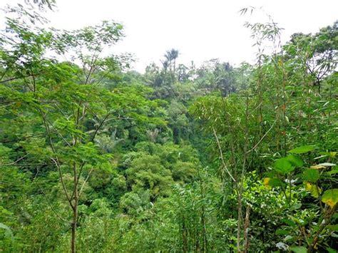 Sawah 5000m tanah di ubud dijual 5 000 m2 tepi sungai di ubud