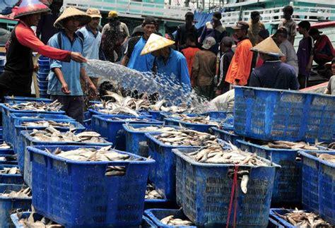 Jual Bibit Lobster Air Tawar Di Bekasi jual ikan laut segar di jakarta jual ikan laut beku