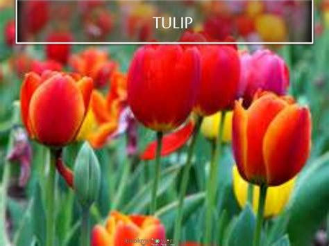 list of flowers with pictures beautiful flowers image gallery most beautiful flowers list