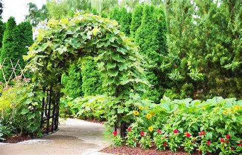 Astuce Jardin Pas Cher by Voici Comment 201 Loigner Les Rongeurs De Votre Jardin Une