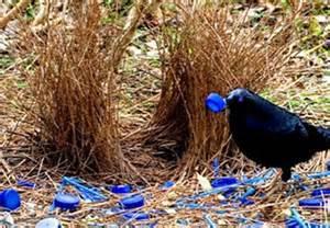wonderful world of animal mating rituals animal mating images