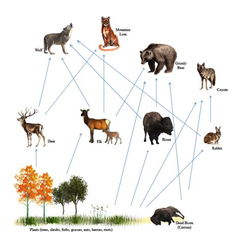 wolf food wolves food chain pictures to pin on pinsdaddy