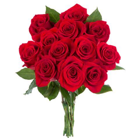 imagenes rosas grandes imagenes de rosas las mejores rosas de internet