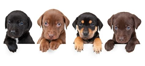 how often can dogs puppies paws why you should often care for your s paws health news