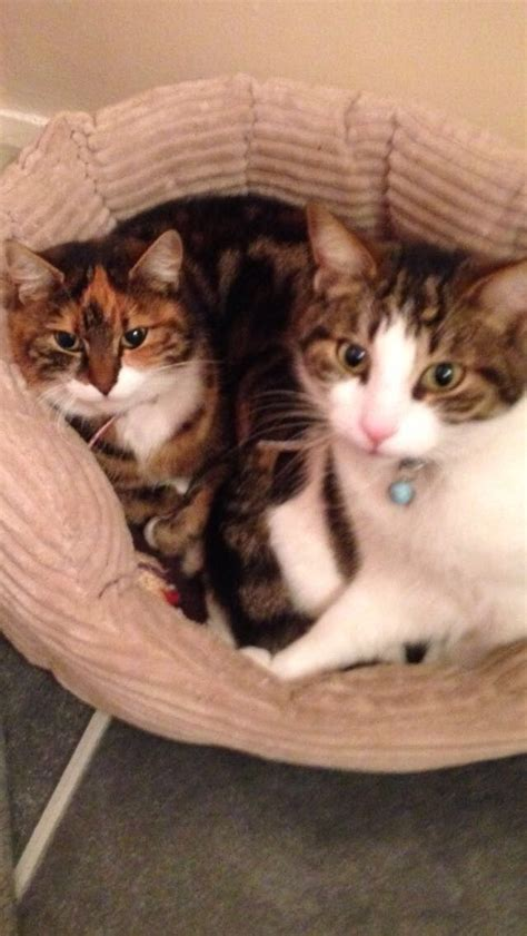 looking for cats and kittens for sale in chicago why not two lovely cats looking for a forever home gateshead
