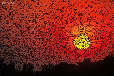 bat migration in kenya animals pinterest