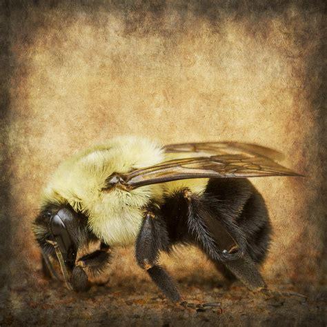 textured buzz textured buzz photograph by bill tiepelman
