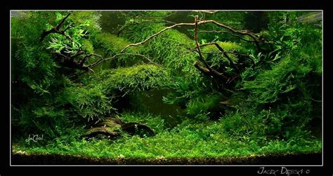 Design Aquascape Indonesia Images