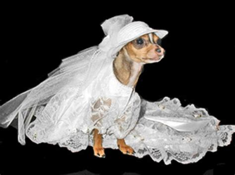Wedding Attire Dogs by The Well Dressed At A Wedding 10 Awesome Bridal Gowns