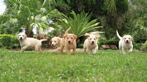 southeastern guide dogs sle work silverbox studios