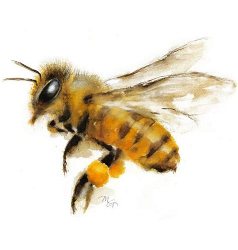 25 best ideas about honey bee on bee bee drawing and honey bee drawing