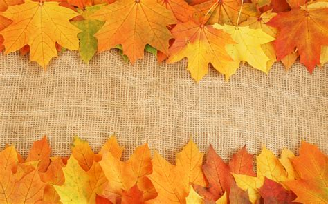 Autumn Leaves Textures Download Photo Background Fall Leaves On White Background