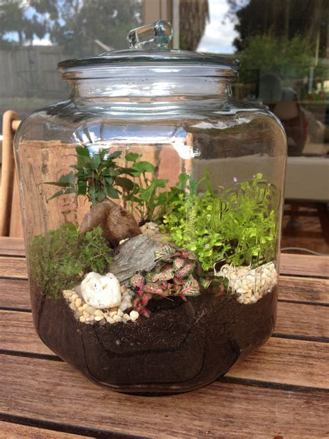 best plants for closed terrariums creating terrariums for 30 in australia lemondepetitdesigns