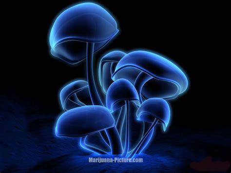 Really Cool Mugs by Wallpaper Mushrooms Jpg