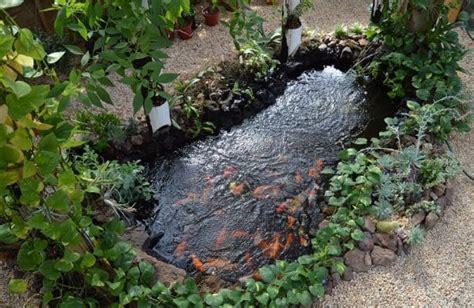 backyard koi pond  aquaponics aquaponics exposed