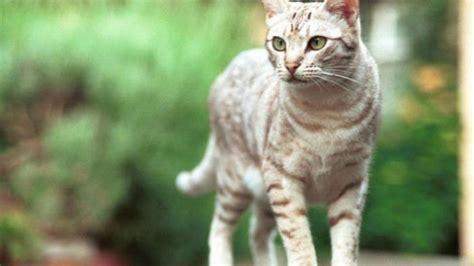 Keranjang Kucing Di Jogja kucing ini dibuang majikannya karena dianggap tribun jogja