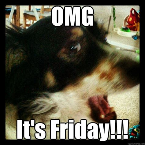 Dog Friday Meme - friday dog memes quickmeme
