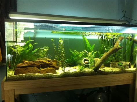 how to aquascape an aquarium extraordinary home aquarium ideas for your home