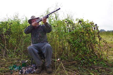 how to a to dove hunt 5 bad habits of dove hunters and how to fix them fish