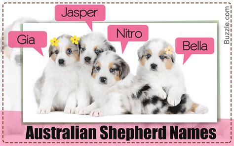 australian names 200 adorably names for your australian shepherd puppy