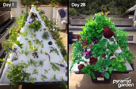 With More And More People Seeking Access To Fresh Organic Tower Vegetable Garden