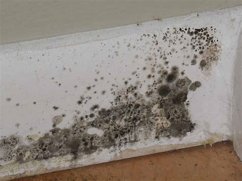 Best Way To Clean Mold Off Bathroom Ceiling Matt Matt S Blog For It Projects And Toys