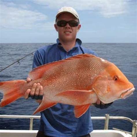 Joran Air Laut tips jitu memancing ikan di laut dan air tawar berita