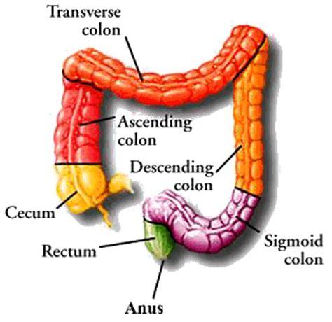 diagram of the colon colon cancer diagram related keywords colon cancer