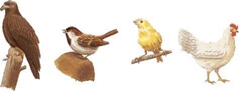 imagenes animales que respiran por los pulmones aves animales vertebrados