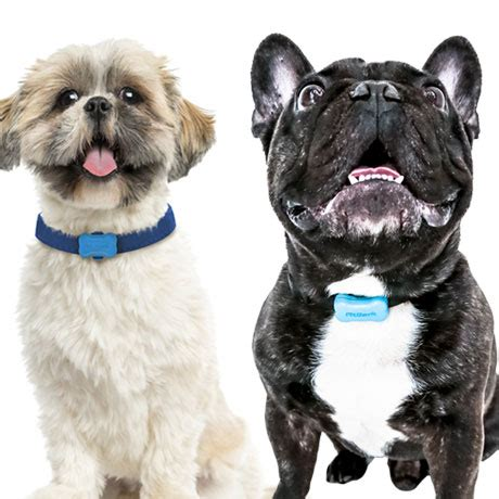 fitbit for dogs these companies are fitbits for dogs boston magazine