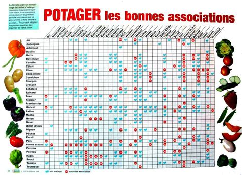 Calendrier Plantations Potager L Association De L 233 Gumes Est Plus Productive Que La