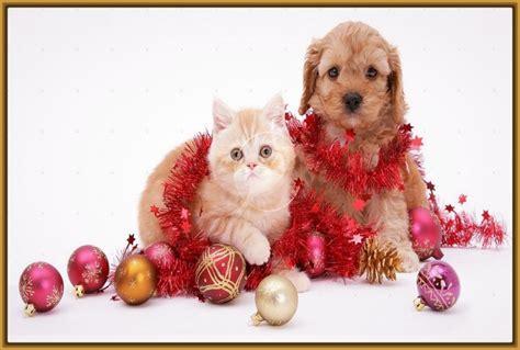 imagenes feliz navidad con perros imagenes de perros y gatos en navidad archivos imagenes