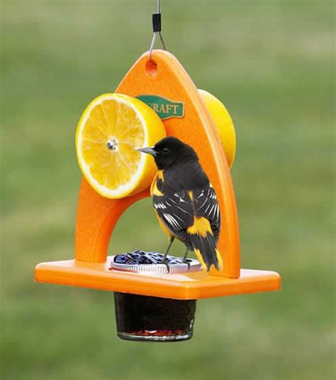 25 best ideas about baltimore orioles birds on pinterest