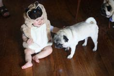 pug costume for child 1000 images about pugs on pug pug puppies and costumes