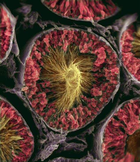 patterns in nature chemicals found in cells human body magnified memolition