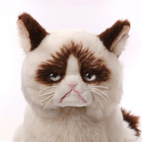 stuffed animals cats gund grumpy cat plush stuffed animal purrfect cat breeds