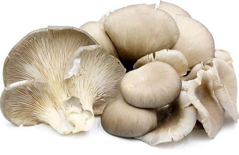 inilah  jenis jamur  enak bisa dimakan  aman