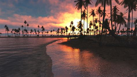 palm tree sunset wallpaper  images