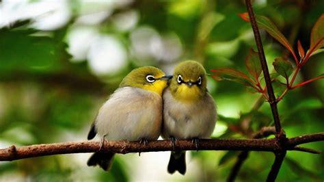 wallpaper cute bird cute birds wallpapers hd desktop www wallpaper com litle