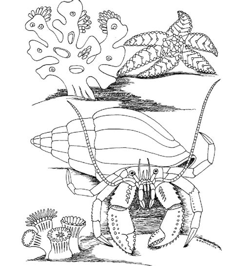 free coloring pages of turtles underwater