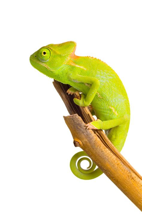 you are one in a chameleon books win with the chameleon the library