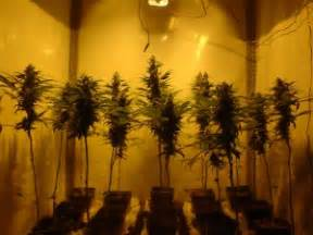 Lights For Growing Weed Q Amp A With Jorge Best Strains For A Grow Cabinet
