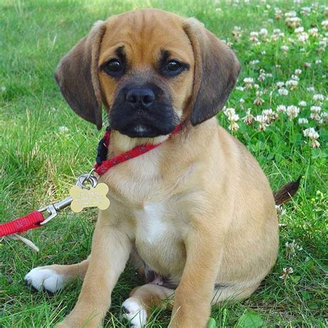 cutest mixed breeds the 28 cutest mixed breed pups that will melt your
